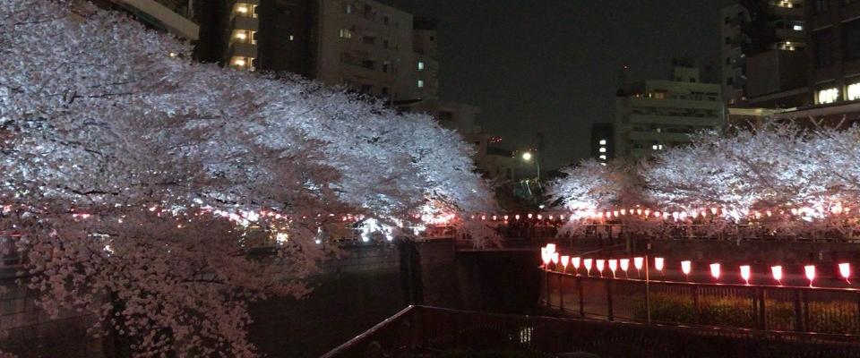 企画展「Sakura Pink展」 中目黒MDP GALLERY